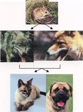Бешенство у кошек и собак
