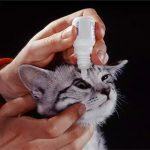 конъюнктивит у кошек и собак лечение в домашних условиях