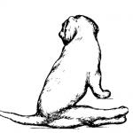 нервная форма чумы у собак симптомы