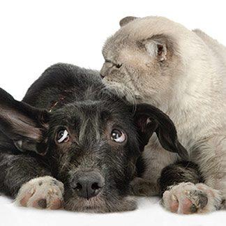 как лечить животных от глистов