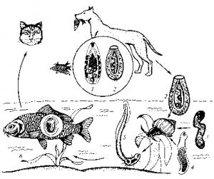Почему у кошек и собак глисты