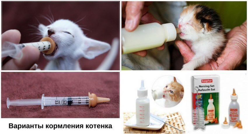 кормление котенка