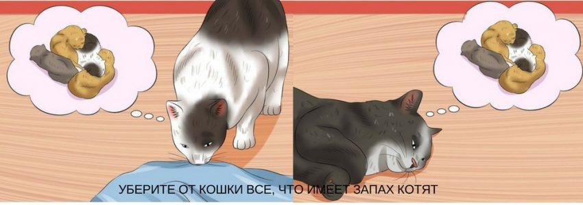 реакция кошки на расставание с котятами