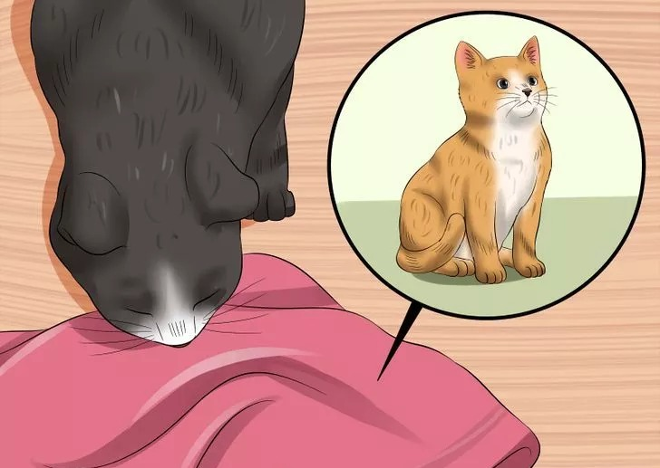 запах котенка от подстилки