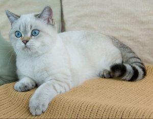 котенок 6 месяцев