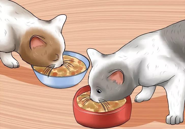 постепенное сближение кота и котенка