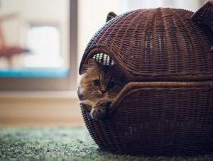 удобное жилище для котят