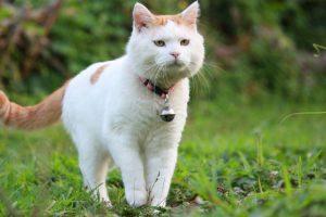 как кастрация влияет на поведение кота?