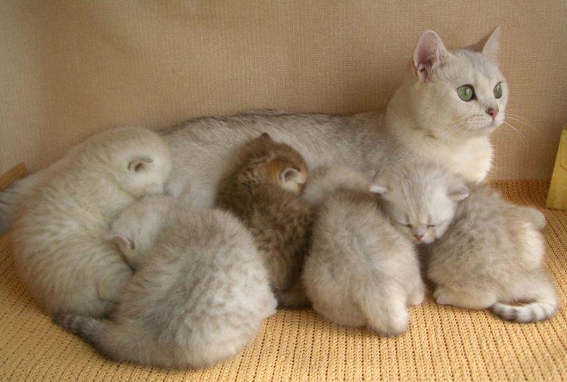 как питаются котята