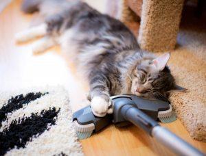 уборка помещений, где живет кошка