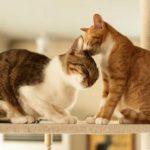 дружба между кошкой и котенком