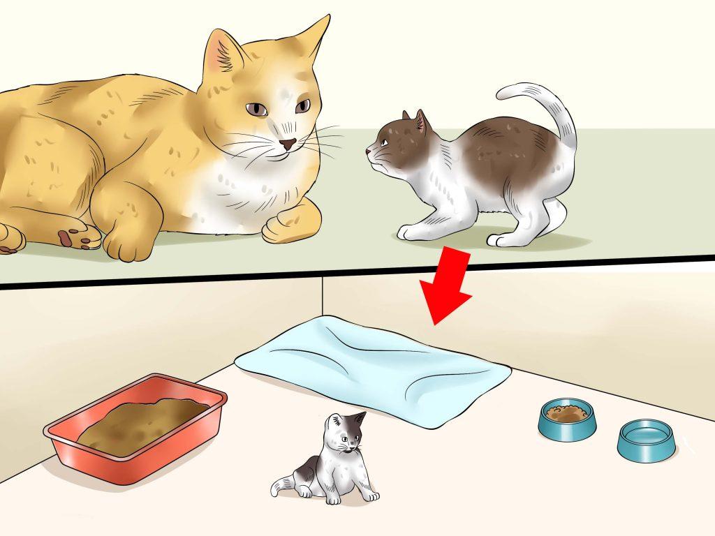 требуется отдельное проживание кота и котенка