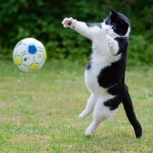 играющая кошка после стерилизации