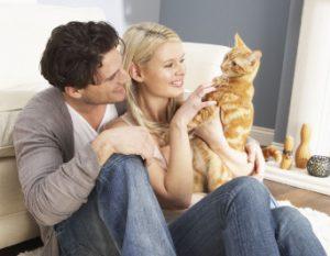 Проявление заботы к коту после кастрации