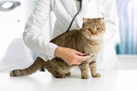 подготовка кота к кастрации
