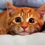 ринит у кошки лечение