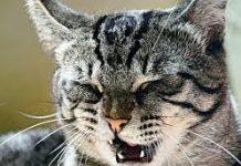 кошка чихает что делать7