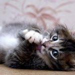 в каком возрасте отдать котенка в новый дом