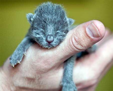 причины рождения мертвых котят