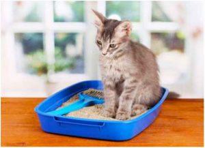 запор у кошки после стерилизации