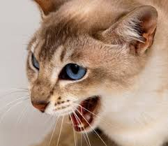 почему кошка съедает своих котят