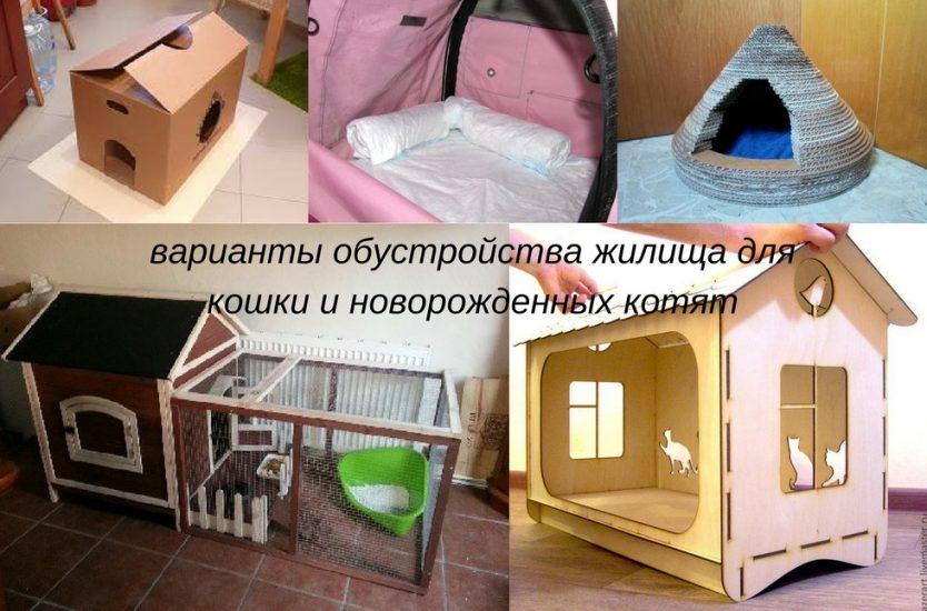 жилище для котят