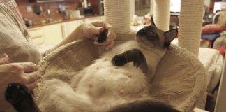 как ухаживать за беременной кошкой