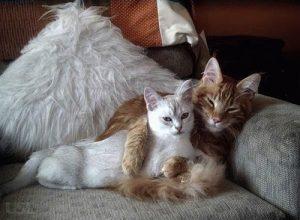что делать, чтобы кошка не забеременила