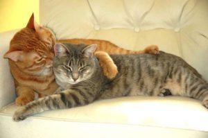 кошка с котом