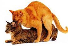 все тонкости вязки кошек