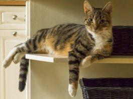 когда кошка может забеременеть после родов?