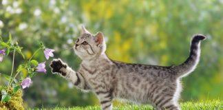во сколько кошка может забеременеть