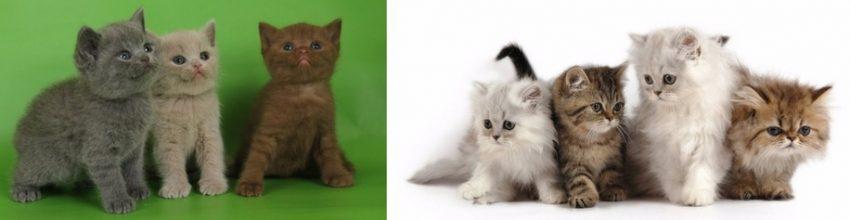 почему рождаются котята разной окраски?