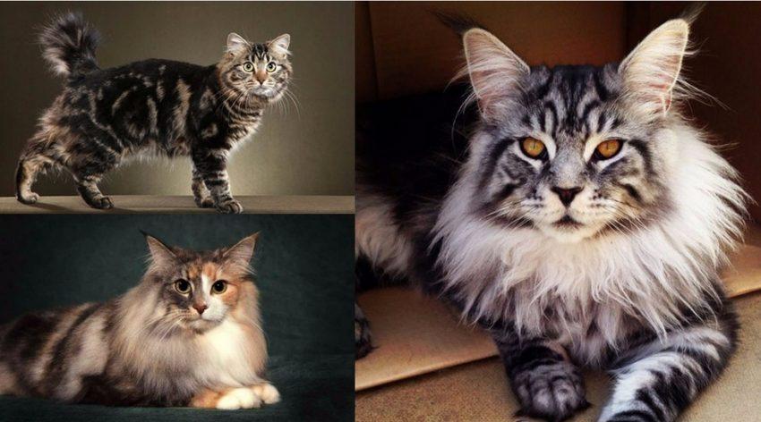 во сколько кошка дает потомство в первый раз