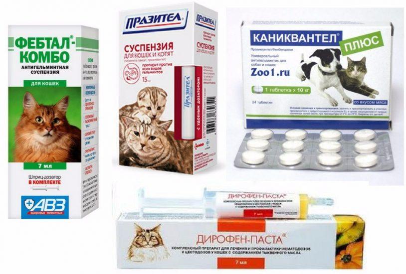 лечение глистов у беременной кошки