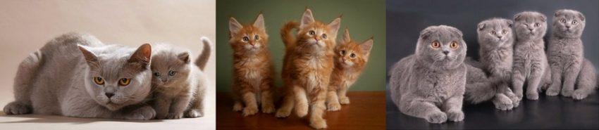 количество котят