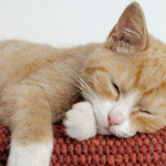 глисты у беременной кошки: лечение