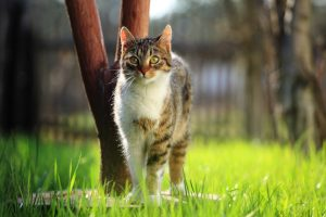 домашняя кошка может подцепить блох на улице