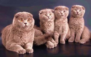во сколько кошка рожает в первый раз