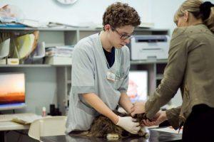 консультация у ветереинара по поводу опухоли МЖ у кошки