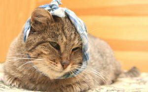 поражение ушей у кошек
