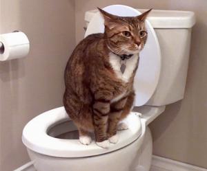 причины крови в кале у кошек