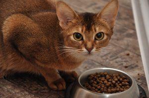 причины того, что кот не ест