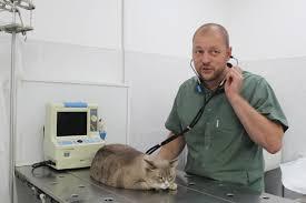 когда надо вести кота к врачу