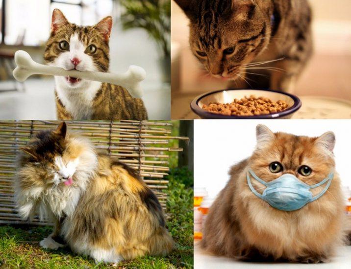 причины появления крови в кале у кошки