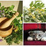 как избавить кошку от блох, используя травы и сосновые опилки
