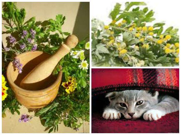 как избавить кошку от блох используя травы и сосновые опилки