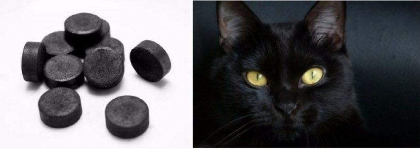 У кошки понос что делать как лечить