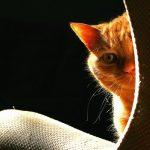 причины плохого запаха кота
