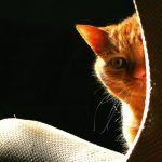 причины плохого запаха мочи у кота